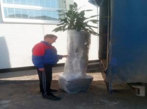 перевозка цветов